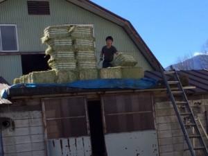 牧草荷卸し現場②