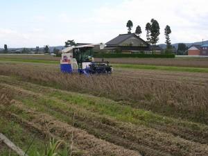 長野県産大豆収穫②